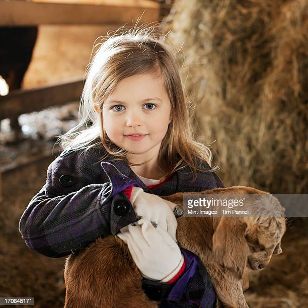 a child in the animal shed holding and stroking a baby goat. - animal cruelty stock pictures, royalty-free photos & images