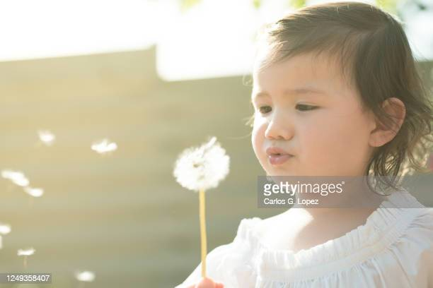 child in white dress blowing a dandelion in a garden in a sunny spring day - white dress stock pictures, royalty-free photos & images