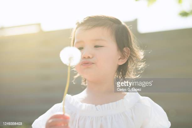 child in white dress holding and blowing a dandelion in a garden in a sunny spring day - white dress stock pictures, royalty-free photos & images