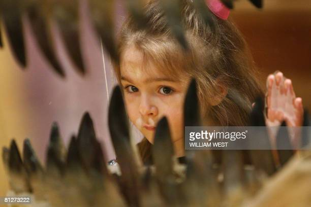 A child inspects the teeth of a Theropod dinosaur at an exhibition titled 'Hatching the Past Dinosaur Eggs Babies' featuring more than 15 complete...