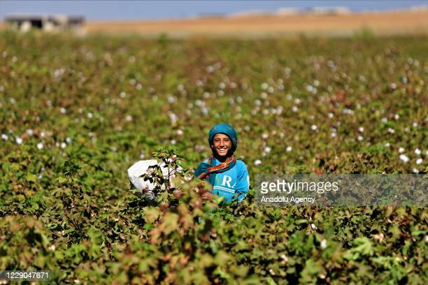 A child is seen at a field on the first year of Operation Peace Spring as life turned to normal in Tal Abyad Syria on October 13 2020 A year on after...