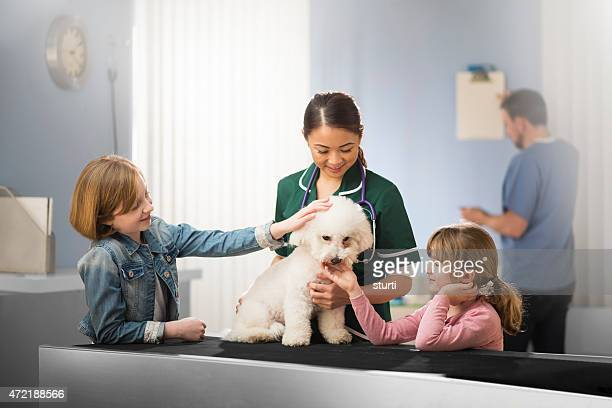 child listening to dog's heartbeat at the vets