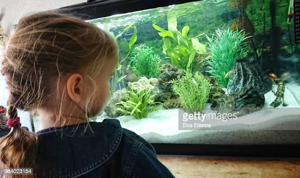 Child (4-5) looking at fish in a home aquarium