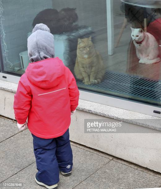 """Child looks at cats sitting behind the window of the """"Cat Cafe"""" which remains closed in Vilnius, Lithuania on April 19 amid the new coronavirus..."""
