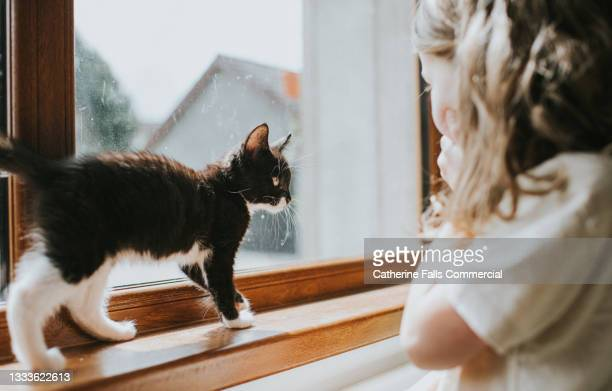 child looks delighted as she looks a black and white kitten on a windowsill - animal body part stock pictures, royalty-free photos & images