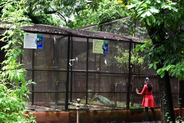 IND: Alipore Zoo Reopens For Public With Strict Covid Restrictions