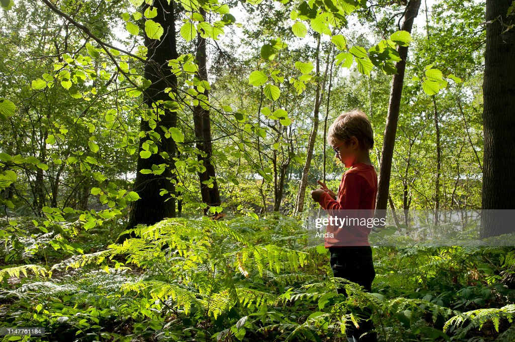 Child alone in an undergrowth of the Scarpe-Escaut Regional Nature Park. : News Photo