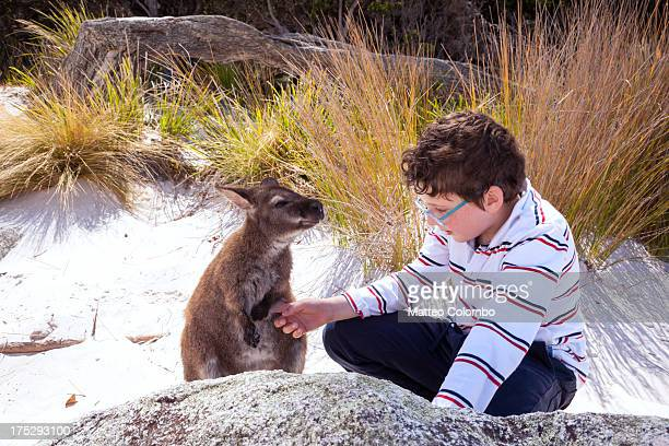 Child petting little wallaby at the beach