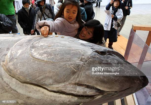 Child places coins on the offered 2.6 meters long, 260 kilograms weight bluefin tuna at Nishinomiya Shrine, the head shrine of Ebisu sect, a deity of...