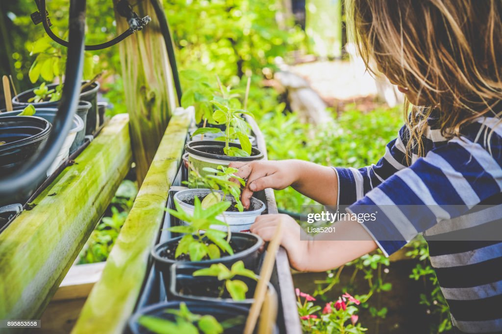 Little girl plants in a community garden, full of plants and nature. child age 4 years old in a candid shoot busy tending to the garden