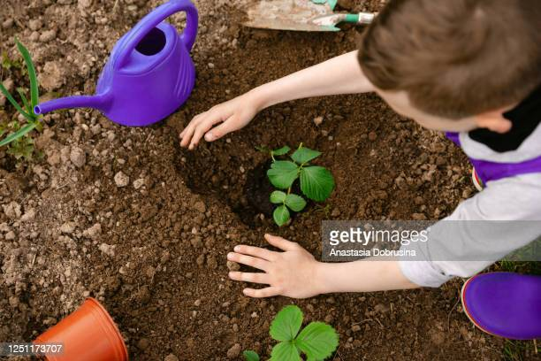 child planting seedling in garden. - earth day stock pictures, royalty-free photos & images