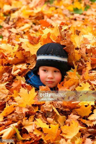 child playing in leaves in kadriorg park, tallinn, estonia - harjumaa stock pictures, royalty-free photos & images