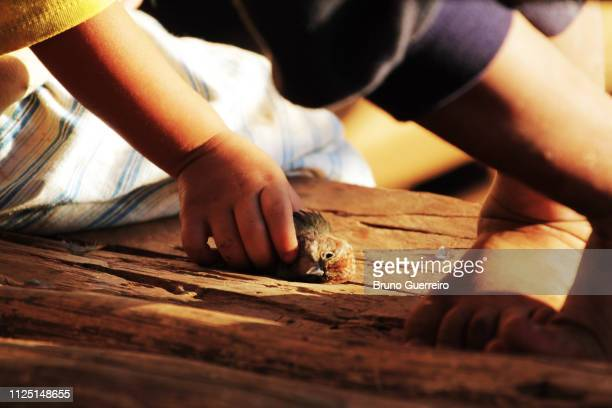 Child playing with dead bird in a remote village