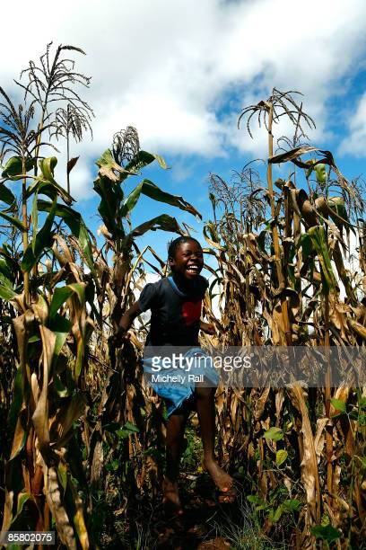 A child plays in corn fields near to the Kumbali Lodge where Madonna is staying during her attempts to adopt the child Mercy James on April 4 2009 in...