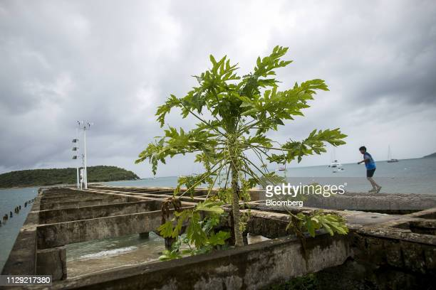 Child plays on a pier damaged from Hurricane Maria at the Playa La Esperanza in Vieques, Puerto Rico, on Friday, Jan. 25, 2019. The Seventeen months...