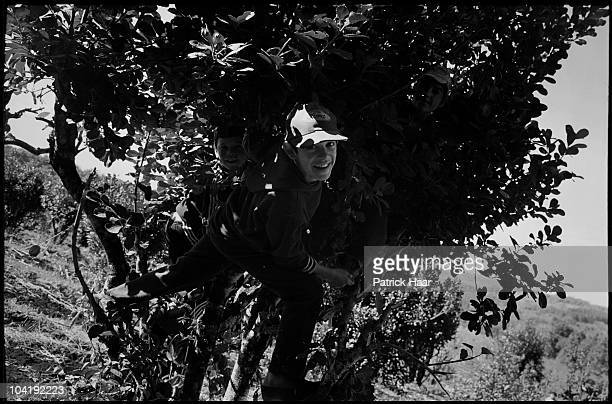 Child plays on a tree on July, 2005 in Tamandua, Argentina. Only a few cooperatives sell their products straight to the public and manage to get a...