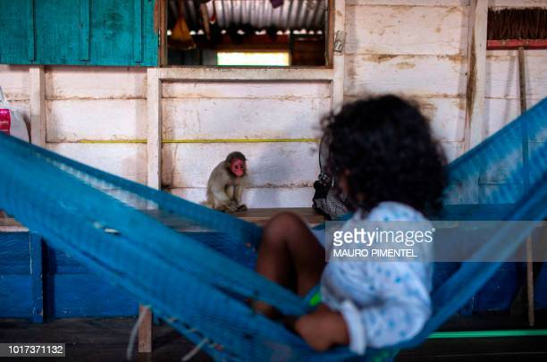 Child plays with a Red Uakari monkey cub inside her home at Sao Francisco do Cubua village in the Mamiraua Sustainable Development Reserve in the...