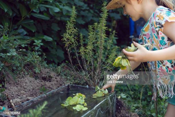 Child (4-5) putting aquatic plants into a small back yard pond