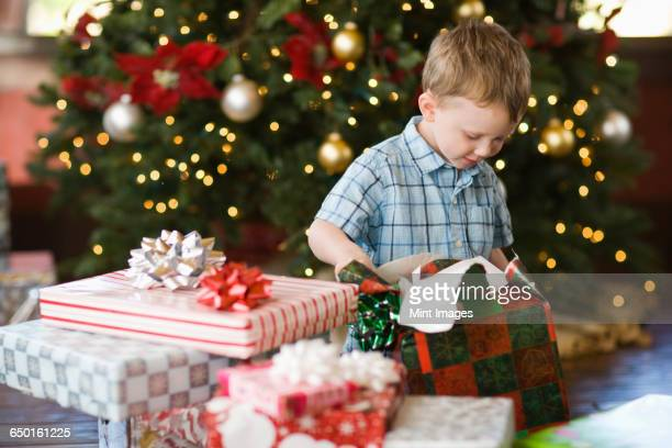 a child sitting by a christmas tree unwrapping a parcel. - unwrapping stock pictures, royalty-free photos & images