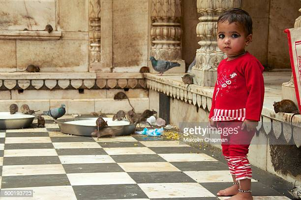 CONTENT] A child stands barefoot at the Karni Mata 'Rat Temple' at Deshnoke near Bikaner Rajasthan India Believed to be reincarnations of the Karni...