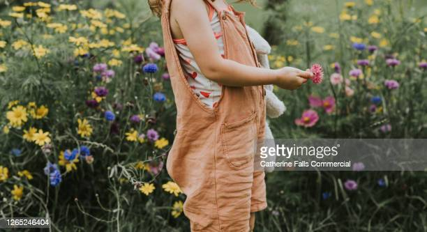 child stands in front of wildflowers, holding a single flower and a soft toy. - copy space stock pictures, royalty-free photos & images