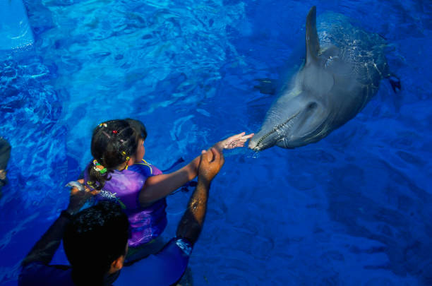 Child Swims With a Dolphin at the CICI Water Park in Acapulco