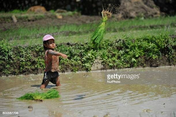 A Child throws rice samplings towads her mother during plantation in the rice paddy field at Khokana Patan Nepal on Saturday June 24 2017 The United...