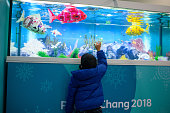 gangneung south korea child touches glass