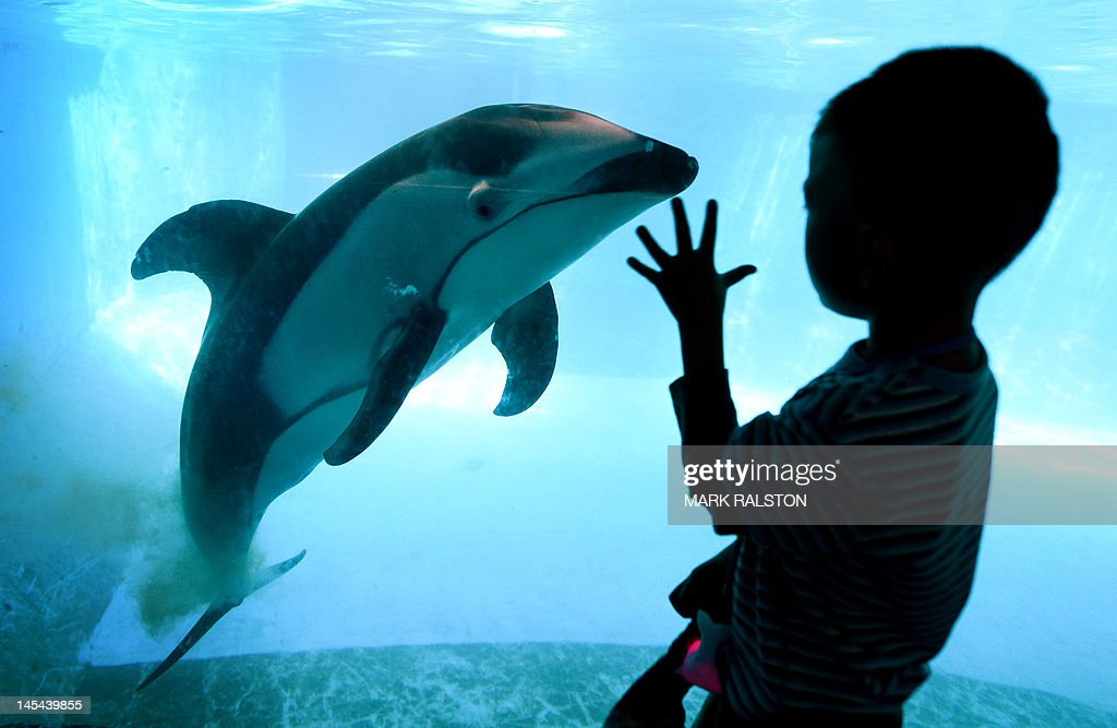 A child views a Pacific white-sided dolp : News Photo