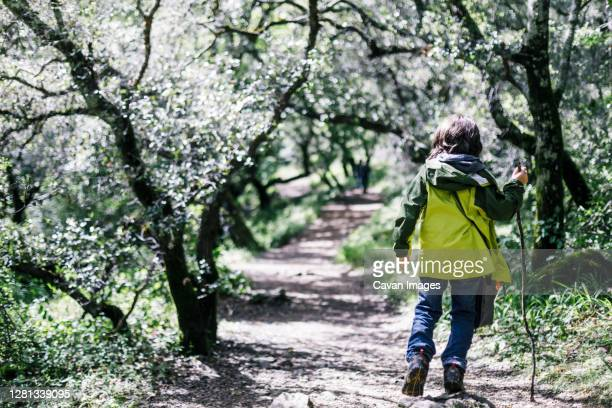 child walking by tunnel of trees at forest - petaluma stock pictures, royalty-free photos & images