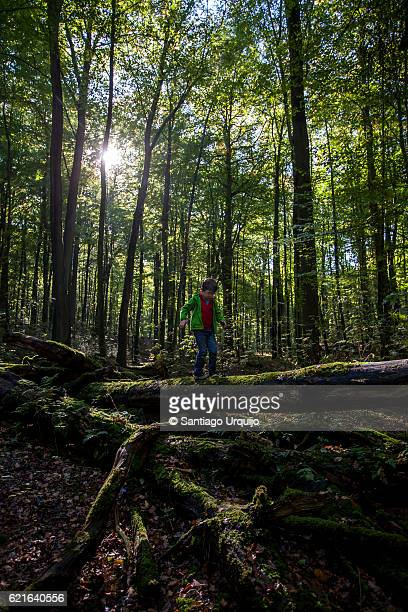 Child walking on top of a moss covered fallen tree