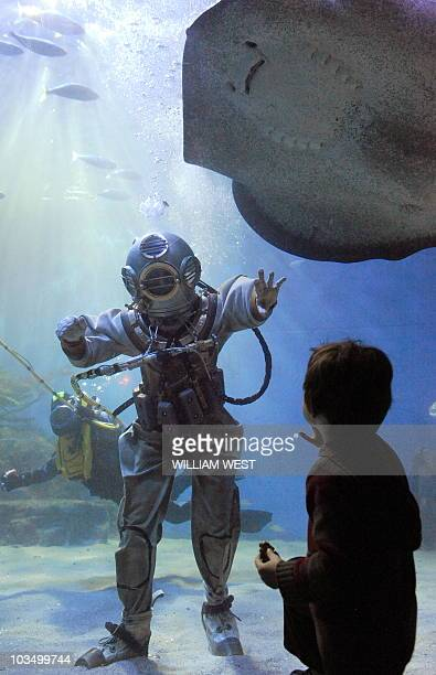 A child watches as a diver wearing a suit commonly used 100 years ago is confronted by a stingray as he takes a walk through the 22 million litre...