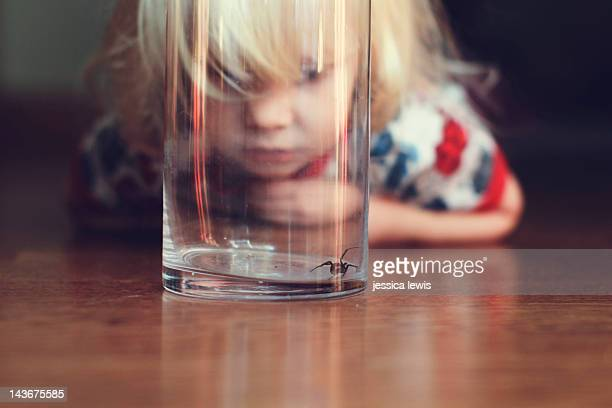 child watching black widow spider - spider stock pictures, royalty-free photos & images
