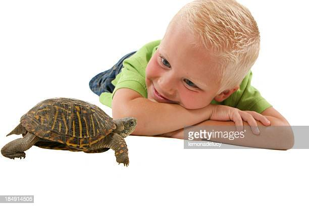 child watching box turtle - primary age child stock pictures, royalty-free photos & images