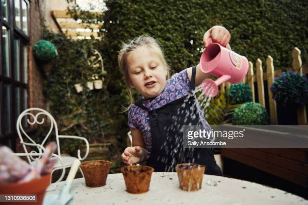 child watering a seed - sally anscombe stock pictures, royalty-free photos & images