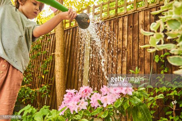 child watering flowers - watering stock pictures, royalty-free photos & images