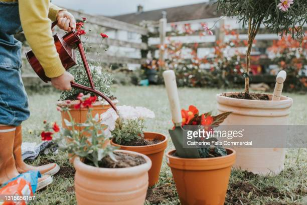 child watering newly potted plants with a watering can - plant part stock pictures, royalty-free photos & images