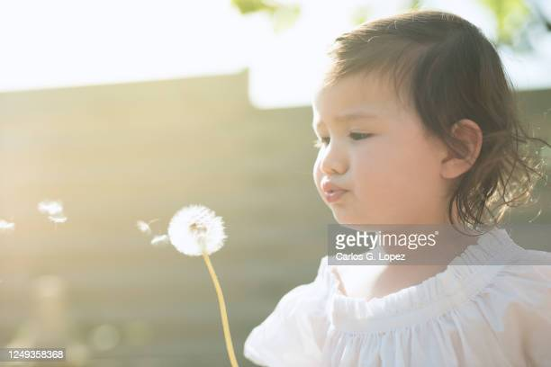 child wearing white dress blows a dandelion in a garden in a sunny spring day - white dress stock pictures, royalty-free photos & images