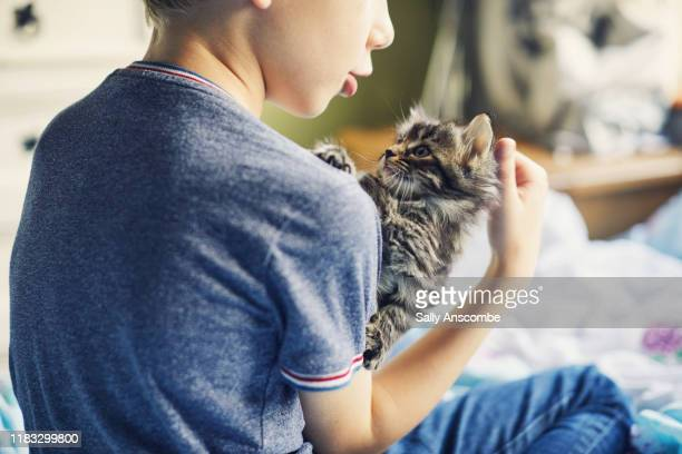 child with a kitten - sally anscombe stock pictures, royalty-free photos & images