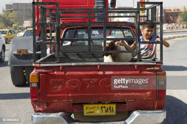 A child with a sheep in the back of a Toyota Hilux in East Mosul Iraq 27 July 2017