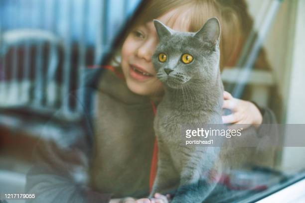 child with cat - british shorthair cat stock pictures, royalty-free photos & images