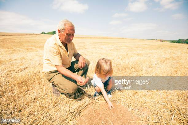 Child with his grandfather in field of wheat