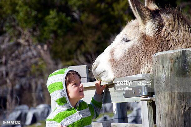 child with ice-cream  smiles at donkey - donkey stock pictures, royalty-free photos & images