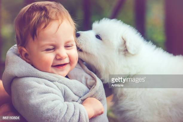 child with samoyed puppy - funny animals stock pictures, royalty-free photos & images