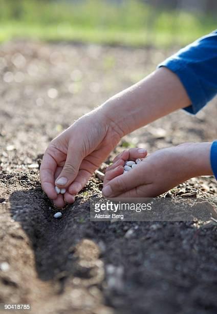 Child working in a vegetable garden