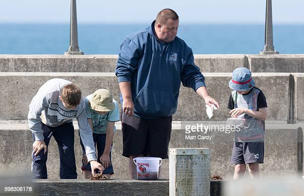 Childen catch crabs from the harbour wall as people gather of the fine weather at West Bay on September 1 2016 in Dorset England As the busiest part...