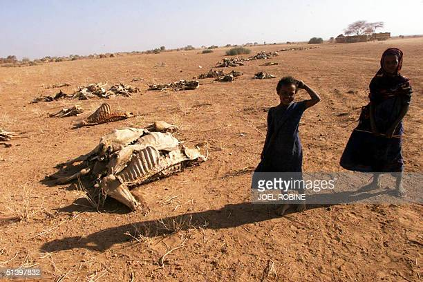 Childen stand beside skeletons of livestock dead from drought 05 April 2000 about 50 km from the village of Gode southeast Ethiopia Nearly a million...