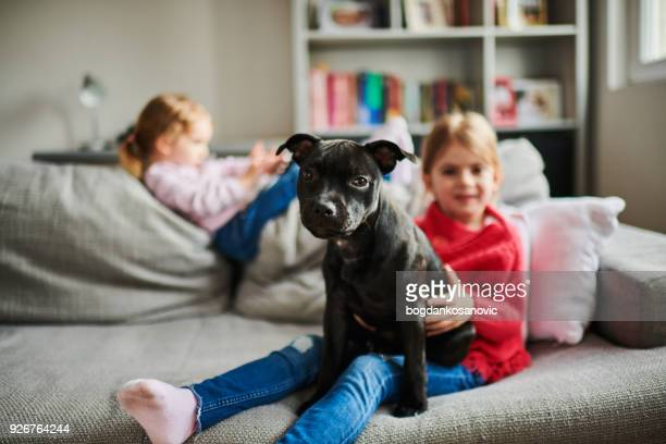 children and a dog - pit bull terrier stock photos and pictures