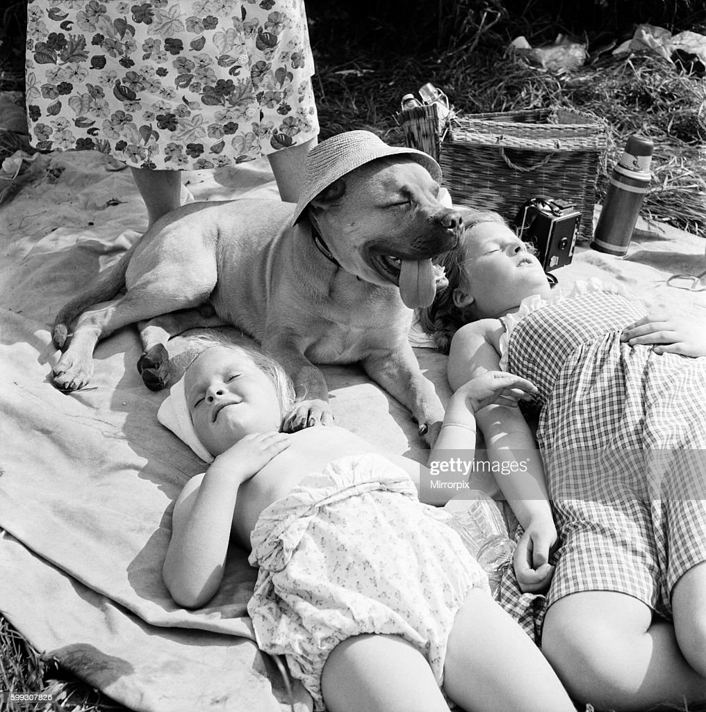 Children and dog at Runnymede enjoying the early summer sun. May 1953 D2774