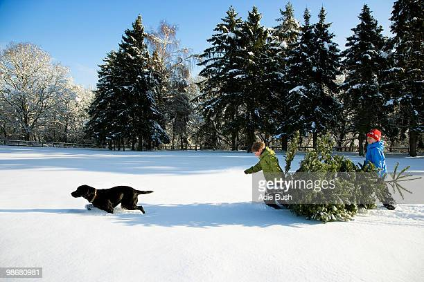 children and dog pulling christmas tree - dragging stock pictures, royalty-free photos & images